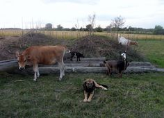 Natural Way To De-Worm Goats
