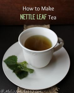 How to harvest wild edible plants and make nettle leaf tea. Did you know all the medicinal reasons to use nettle leaf tea? Recipe and tutorial here http://melissaknorris.com/2014/03/19/wild-edible-plants-make-nettle-leaf-tea/