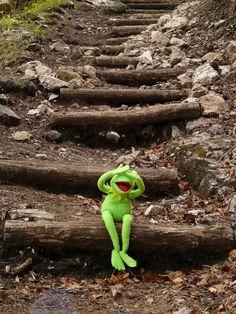 Free Image on Pixabay - Kermit, Frog, Sit, Stairs Hermit The Frog, Sapo Kermit, Funny Billboards, Sapo Meme, Frog Sitting, The Muppet Show, Muppet Babies, Jamel, Work Memes