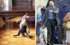 16 chats qui ressemblent étrangement à d'autres trucs