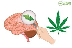 9 Essential Questions about Your Body's Endocannabinoid System Online Certificate Programs, Brain Stem, Endocannabinoid System, Essential Questions, Cell Membrane, Cellular Level, Seizures, Neurotransmitters, Plant Needs