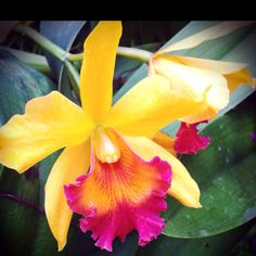 i love orchids...and these colors are gorgeous