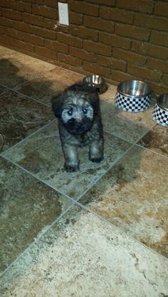 Baby Fiona <3