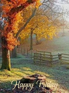 Autumn is my favorite season of the year.That cool,crisp, calm feeling in the air with beautiful colorful leaves cascading from trees. Autumn Morning, Autumn Day, Autumn Leaves, The Animals, Autumn Scenes, Seasons Of The Year, All Nature, Fall Pictures, Fall Images