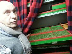 Cajones con cesped artificial para las exposiciones micológicas de Barrengorri  #GaldakaON
