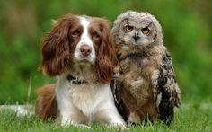 かわいい異なる動物仲良し画像犬フクロウ