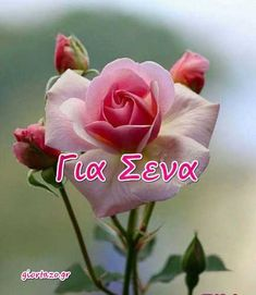 Κάρτες Αγάπης Love Cards .. giortazo.gr Christmas Phone Wallpaper, Beautiful Pink Roses, Name Day, Love Cards, Mom And Dad, Best Quotes, Beautiful Pictures, Happy Birthday, Flowers