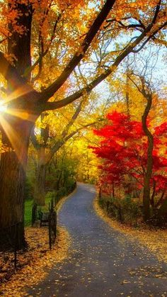Autumn Park with Trees, Light & foliage Fall Pictures, Pretty Pictures, Autumn Photos, Fall Images, Beautiful World, Beautiful Places, Simply Beautiful, Beautiful Park, Beautiful Artwork
