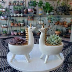 Pottery is a welcome addition to many people's interior décor and has been used for centuries to decorate special rooms and bring them to life. House Plants Decor, Plant Decor, Clay Projects, Clay Crafts, Ceramic Planters, Planter Pots, Pot Plante, Ceramic Animals, Succulent Pots