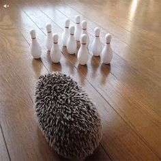 18 Ways Hedgehogs Make The Perfect Significant Other | Odyssey
