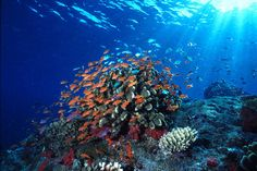 Bunaken National Marine Park, Indonesia