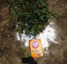DIY Home Sweet Home: A Black Thumb's Gardening Hacks