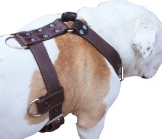Genuine Leather Dog Harness X-Large 33'-40' Chest, 1.3' Wide Adjustable Straps >>> Click image for more details. (This is an affiliate link and I receive a commission for the sales)