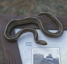 Tactile snake model on an interpretive panel Zoo Signage, Tap System, Museum Exhibition Design, Reptile House, Outdoor Signs, Work Inspiration, Sign I, Sign Design, Landscape Architecture