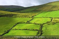"""Ring of Kerry - Beautiful drive.  Everything you want to see in Ireland - scenery, hills, thatched roofs and the most adorable towns you'd fantasize about living in.  Lots and lots and lots of sheep.  You should figure out right away why the sheep are painted, but if you don't, go with DC's best answer, """"I'm an artist and my canvas is sheep!""""  (A loud pub, fast friends, beer and exaggerated hand gestures make this even funnier.)"""