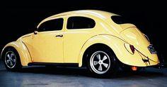cal look beetle - Google Search