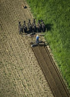Amish Farmer Tends His Land In New Wilmington, Pennsylvania