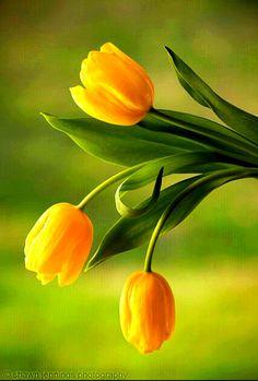 Leaf hugging pink tulip tattoo ideas pinterest loveliegreenie gardenofelegance mightylinksfo Gallery