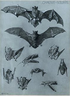 Vintage bat printables