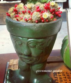 "102 Likes, 2 Comments - Shoko Taira (@greenmama6) on Instagram: ""オッサン、お花つけて真っ赤な種つけて可愛すぎ❤ #greenmama#garden#cactus#cactuslove#cactuslover #サボテン#沖縄"""