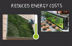 "Green Walls Reduced Energy Costs.  ""Exterior living walls give buildings protection, not just from temperature fluctuations but also by diverting water away from walls during heavy rain and providing protection from UV radiation."""
