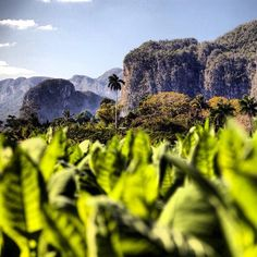 Pinar del Rio #cuba