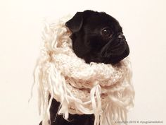"""Check out our internet site for even more relevant information on """"black pugs"""". It is an outstanding location to find out more. Pug Gifs, Socializing Dogs, Pug Pictures, Yorkshire Terrier Puppies, Black Pug, Cute Pugs, Cute Little Animals, Old Dogs, Pug Love"""