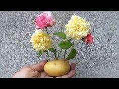 COLOQUE 1 GALHO de ROSA na BATATA e VEJA O INACREDITÁVEL RESULTADO! - YouTube Fruit, Plants, Fez, Youtube, Ferns Garden, Planting Flowers, Flower Gardening, Rose Trees, Wall Trellis