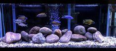 Beatles Mono, The Beatles, Aquarium, Goldfish Bowl, Aquarium Fish Tank, Aquarius, Beatles, Fish Tank