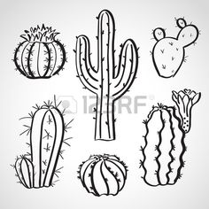 Line Drawing Of Cactus Bing Images Tattoos In 2019 Cactus