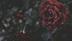 Wallpaper Backgrounds Aesthetic - a dark romance Olgierd Von Everec, Rosé Hair, Dark Romance, Schulter Tattoo, Wonderland, Tale As Old As Time, Hades And Persephone, Dark Fantasy, Beauty And The Beast