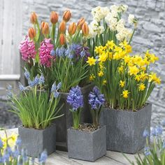 This picture, from Powell River Garden Club, shows how a cheerful grouping of containers filled with spring blooming bulbs can brighten up a porch.