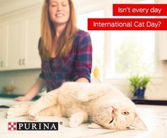 International Cat Day seems like the purrfect day to adopt! Tell us the name of your new cat BFFs in the comments! . . . . . . . #PurinaPartner #cat #cats #catsofinstagram #catsofig #meow #cute #cutie #purr #love #adopt #adoptdontshop #rescue #rescuecat #shelter #humanesociety #hsbroward #florida #southflorida #broward #fortlauderdale #miami #purina @purina #love #cutenessoverload #dailyfluff #animal #pet