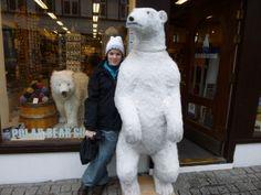 Polar bears in downtown Reykjavik