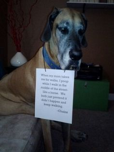 Great Dane. Dog shaming. Funny. When my mom takes me for walks, I poop in the middle of the street- like a horse.We both just pretend it didn't happen and keep walking. - Chains Dooloo