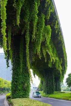 What magnificent plant growth on this bridge....wow!!