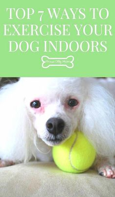 Top 7 Ways To Exercise Your Dog Indoors Dog Health Dog Training Tips : Cesar Millan, Dog Care Tips, Pet Care, Puppy Care, Pet Tips, Dog Training Tips, Potty Training, Training Classes, Training Quotes