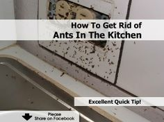 How To Get Rid Of Ants In The Kitchen - http://www.hometipsworld.com/how-to-get-rid-of-ants-in-the-kitchen.html