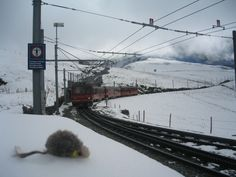 Jungfrauユングフラウ ネズミ君
