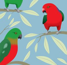King Parrot - Cat MacInnes Illustration