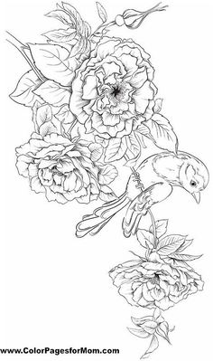 Advanced Coloring Pages for Adults who like to color. adult coloring pages to print. Bird Coloring Pages, Printable Coloring Pages, Adult Coloring Pages, Coloring Sheets, Coloring Books, Flower Sketches, Silk Painting, Colorful Pictures, Embroidery Patterns