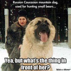Russian Mountain Dog