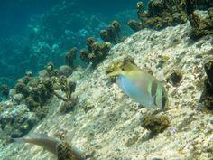 Snorkel en Koh Tao Koh Tao, Snorkeling, Thailand, Pets, Animals, World, Thailand Travel, Underwater, Diving