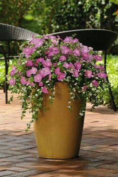 Container Gardening Add a planter of Shock Wave Rose Pelleted Petunia for a punch of pink in your flower container garden- What brilliant color! Outdoor Flowers, Outdoor Planters, Garden Planters, Outdoor Gardens, Potted Plants Patio, Fall Planters, Flower Planters, Container Flowers, Container Plants