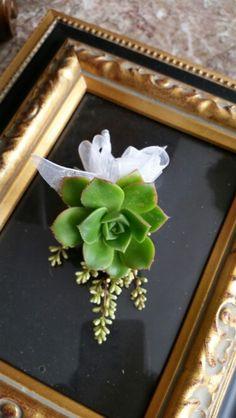 Cactus Boutennier