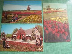 Set of 3 Vintage Postcards - Unused Unstamped - Holland, Michigan - Color Photographic Postcards - Windmill, Tulip Time, Windmill Island by AVintageLifeByNikki on Etsy