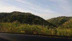 Flores y montañas