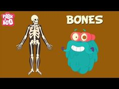 Bones | The Dr. Binocs Show | Learn Series For Kids - YouTube