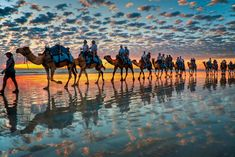 Camels at Sunset, Cable Beach, Western Australia  (by symoto)