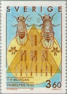 Sello: Nobel Laureates in Physiology (T. Morgan) (Suecia) (Nobel Prize Winners in Physiology or Medicine) Mi:SE 1589 Nobel Prize Winners, Physiology, Medicine, Baseball Cards, Model, Stamps, Google, Sweden, Door Bells